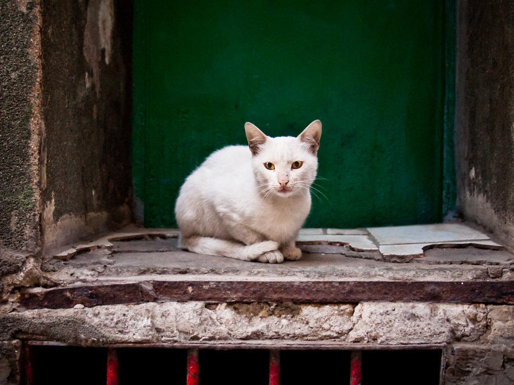 Stray Cat, Tarlabaşı - Istanbul