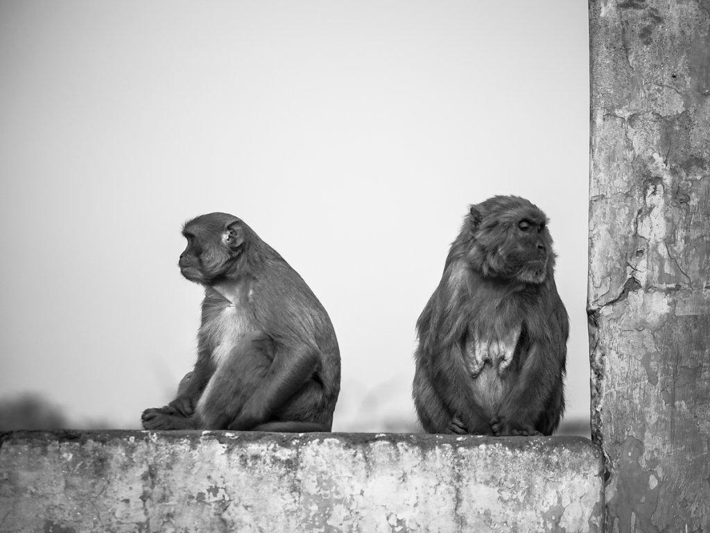 Monkey Beef, New Delhi